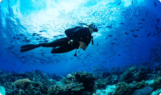 Explore Casha's diving schools when on vacation in Curaçao.