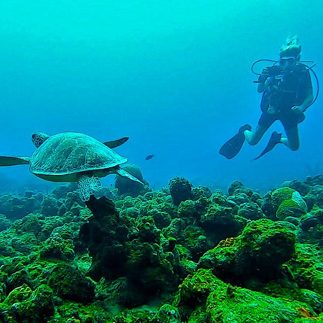 Rebel diving_Image 10_650x650px