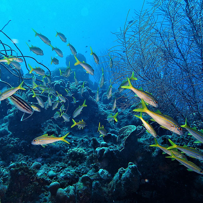 Rebel diving_Image 1_650x650px
